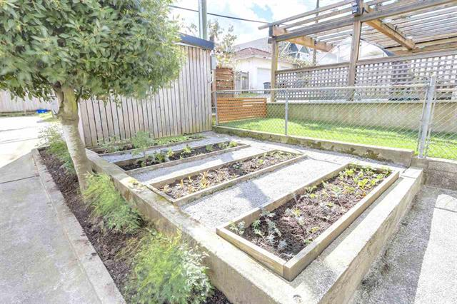 photo of back gardens